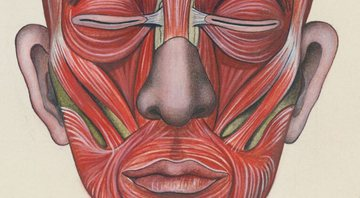 Anatomia muscular da face - Getty Images