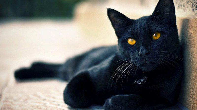 Aventuras Na História Gato Preto Entenda Como O Animal