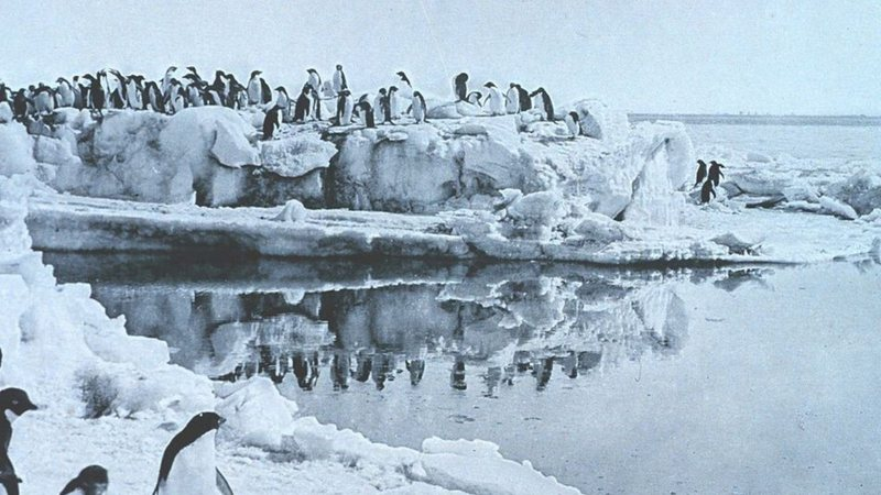 Penguins fotografados por George Murray