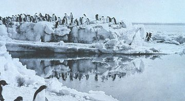 Penguins fotografados por George Murray - Wikimedia Commons