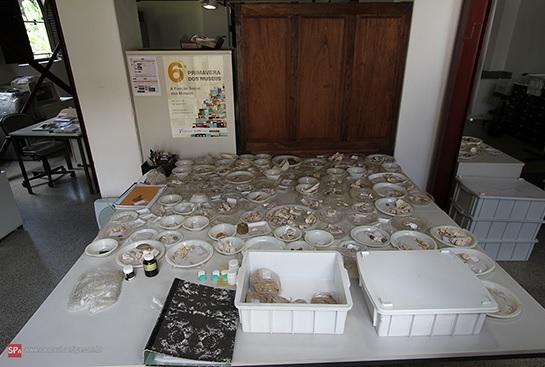 Amostras de pesquisa no Centro de Arqueologia de São Paulo, Morrinhos. Foto: Divulgação.
