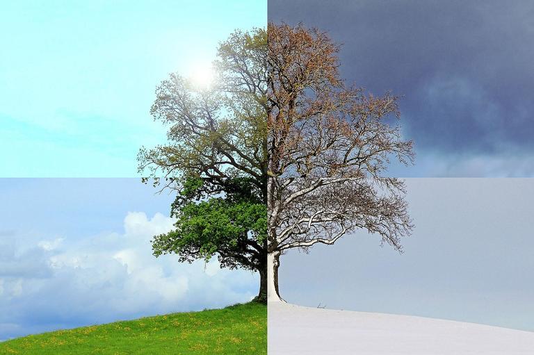 Onde você mora, as árvores ficam assim?