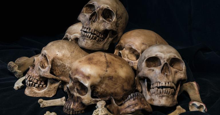 Restos de crânio e ossos
