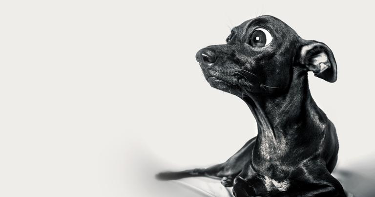 Pequeno cachorro assustado