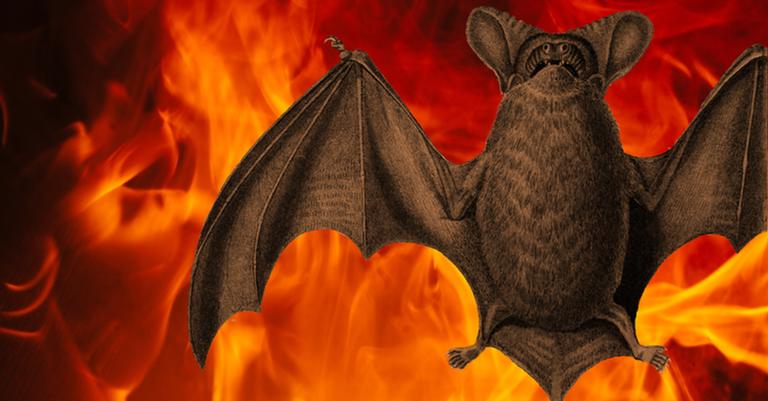 O morcego brasileiro ilustra e o que aconteceria se desse certo