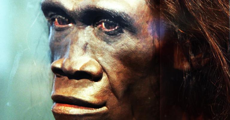 Reconstrução de uma fêmea adulta da espécie Homo erectus