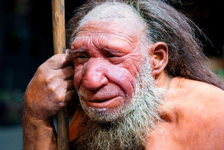 Reconstrução de um neandertal no museu de Mettmann, na Alemanha